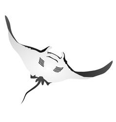 Atlantic manta vector image vector image