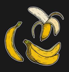 banana fruit bunch vector image vector image