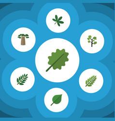 Flat icon bio set of baobab maple acacia leaf vector