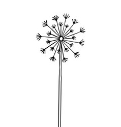 hand drawn black silhouette dandelion vector image