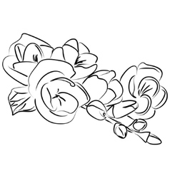 ink sketch freesia flower vector image vector image