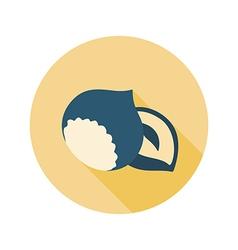 Nut flat icon Fruit vector image