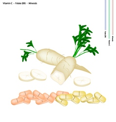 Daikon radish with vitamin c b9 and minerals vector