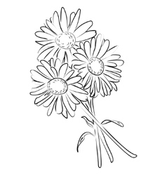 an ink sketch of camomile flower vector image vector image
