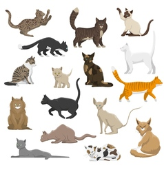 Domestic cat breeds flat icons collection vector