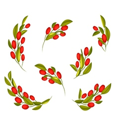 Set of Red Ripe Olives on A Branch vector image