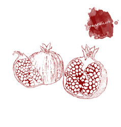 a whole pomegranate and a piece of ripe vector image