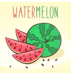 ripe watermelon vector image
