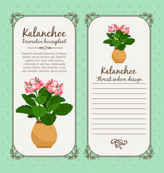 Vintage label with potted flower kalanchoe vector