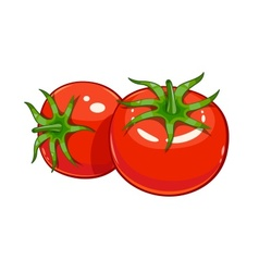 Pair red ripe tomato vector