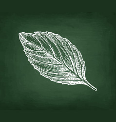 Chalk sketch of basil vector