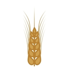 Wheat ears food plant agriculture icon vector