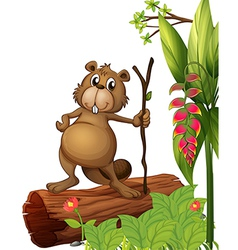 Cartoon Beaver vector image