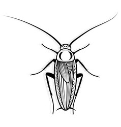 Cockroach design animal for vector