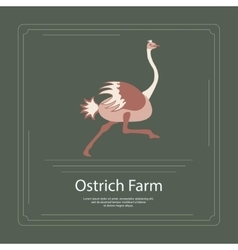 Logotype of ostrich farm vector