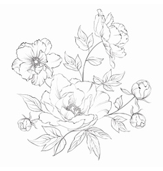 Bush of beautiful peonies vector