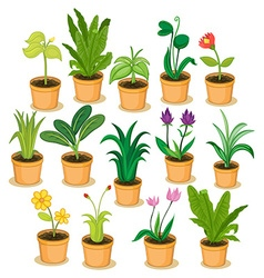 Potted plants and flowers vector image
