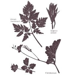 Set herbarium of grass leaf vector