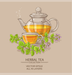 cup of oregano tea in teapot vector image