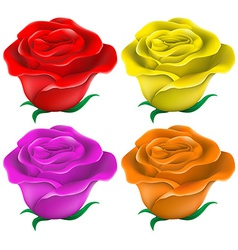 Colourful roses vector