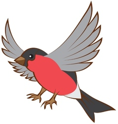 Flying bullfinch opened wings vector