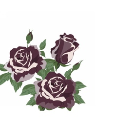 Vintage watercolor roses vector