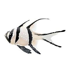 Banggai cardinalfish vector image vector image