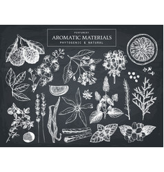 Hand drawn perfumery ingredients sketch vector