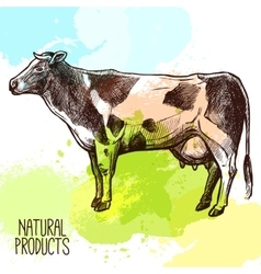Cow sketch vector