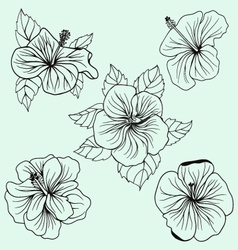 Set of Hawaii hibiscus flower leaf vector image