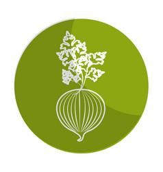 Sticker fresh onion with plant organ food vector