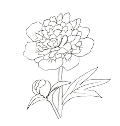 Hand drawn with peony flower vector