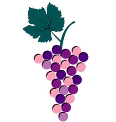 Bunch of grapes on white background vector image vector image