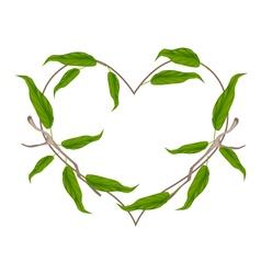 Evergreen leaves in a heart shape wreath vector