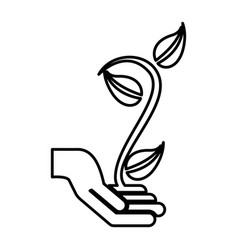 hand human with plant silhouette isolated icon vector image