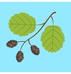 Alder twig with branch leaves and cones vector