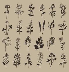 Herbal vintage ink set vector