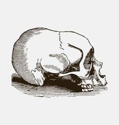 Horsey vector image