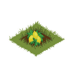 Isometric cartoon fruit garden bed planted with vector