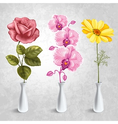 Flowers in the vases vector image vector image
