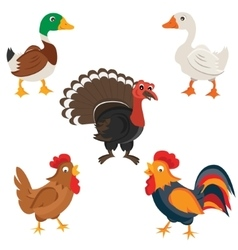 Isolated Farm birds in cartoon style vector image vector image