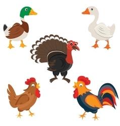 Isolated Farm birds in cartoon style vector image