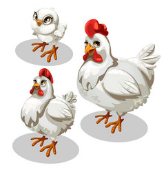 maturation stages of the chicken cartoon style vector image vector image