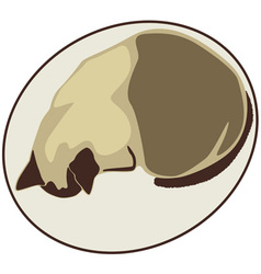 Kitty in oval vector