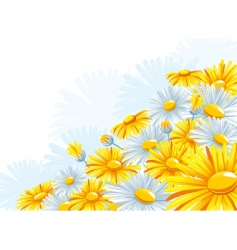 Beautiful background with a chamomile vector
