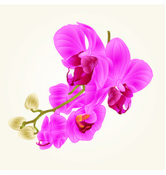 stem with flowers and buds beautiful orchid vector image vector image