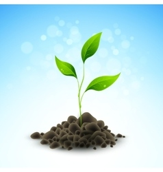 Plant sapling growing vector image vector image