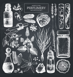 Hand drawn perfumery ingredients sketch vector