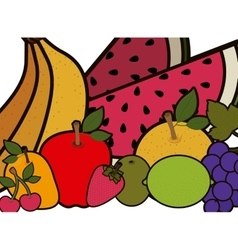 Isolated fruits set design vector image