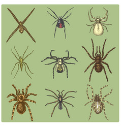 spider or arachnid species most dangerous insects vector image